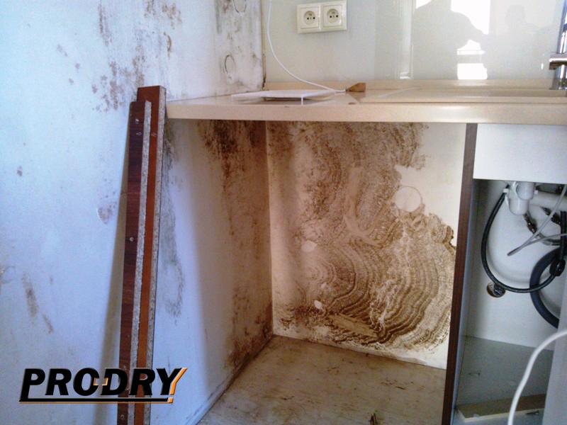 odgrzybianie - grzyb na ścianie